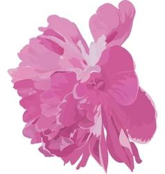 Pink peony vector