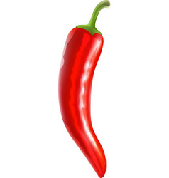 Red pepper isolated on white background vector