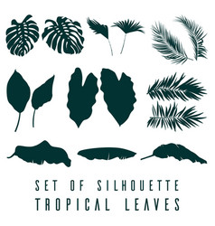 set of tropical leaves plants on a white backgroun vector image