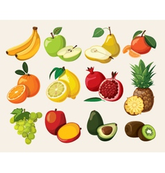 A set of delicious fruit vector image vector image