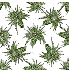 seamless pattern with green Aloe Vera vector image vector image