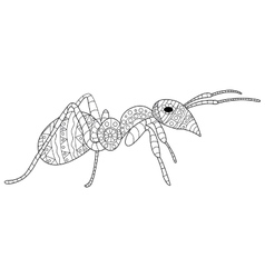 Ant Coloring for adults vector image