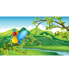 Cartoon Parrot Landscape vector image