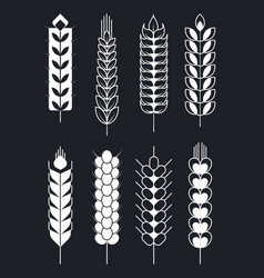 ear of wheat isolated icons monochrome sketch vector image