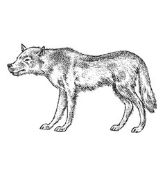 Gray wolf wild animal symbol of the north and vector