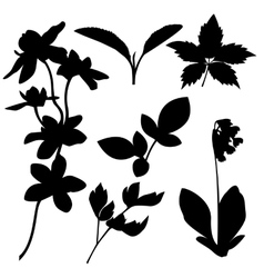 set botanical silhouettes vector image