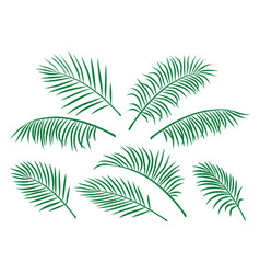 Set of green isolated palm leaves vector