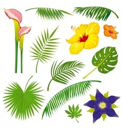 Tropical jungle leaves and flowers set vector