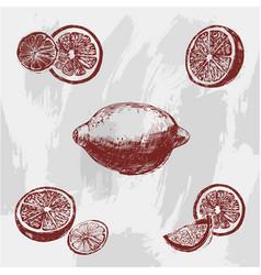 vintage ink hand drawn lemon isolated on grunge vector image