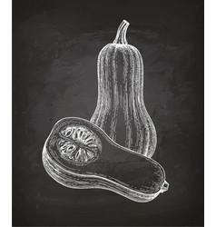 Chalk sketch of butternut squash vector