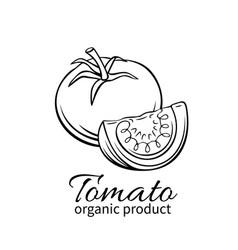 Hand drawn tomato icon vector