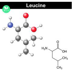 Leucine essential amino acid formula vector