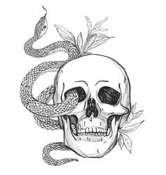 Skull and Snake Vintage vector image vector image
