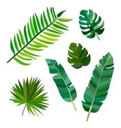 Set of palm leaves on white background vector image vector image