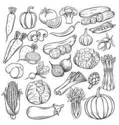 hand drawn vegetables icons set vector image vector image