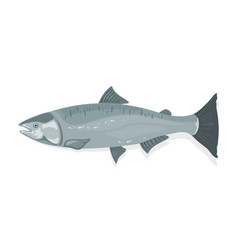 Atlantic salmon with fusiform body and silver-blue vector