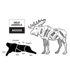 cut of elk set poster butcher diagram - desert vector image