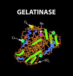 Gelatinase is a molecular chemical formula enzyme vector