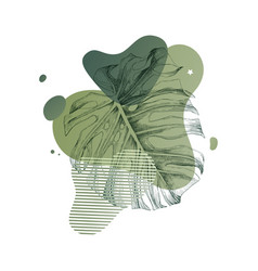 hand drawn monstera leaf in modern style vector image