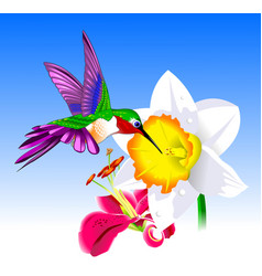 hummingbird and flower vector image
