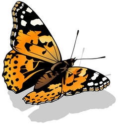 Painted lady butterfly vector