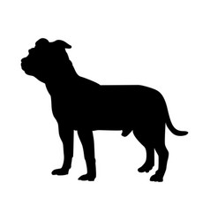Staffordshire terrier dog silhouette vector