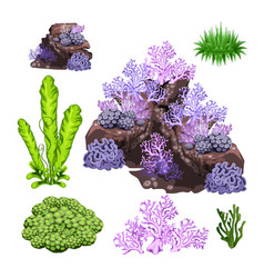 The set of algae corals and underwater rocks vector