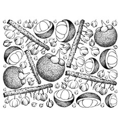 Hand drawn background of otaheite gooseberry and m vector
