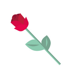 red rose isolated on white background single vector image