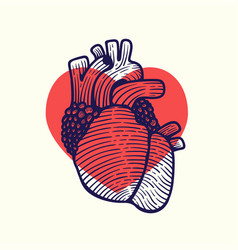 human heart that is falling in love vector image