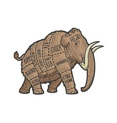 mammoth cut beef sketch vector image