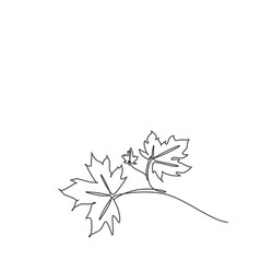 One single line drawing maple leaf tropical vector