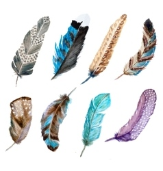 Watercolor feathers vector image