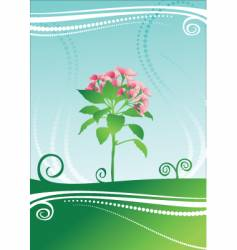 beauty flower vector image vector image