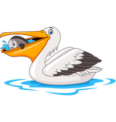 Cartoon pelican eating fish vector
