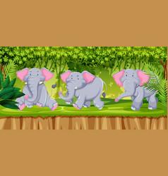 Elephants in jugnle scene vector