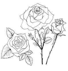 coloring book flowers of the rouse vector image