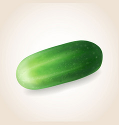 cucumber vegetable isolated vector image vector image