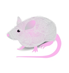 Gray mouse vector