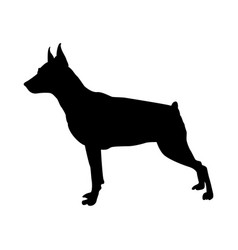 Miniature pinscher dog silhouette vector