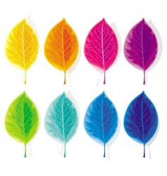 Set colored leaves vector