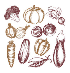 vegetables - colored hand drawn vector image