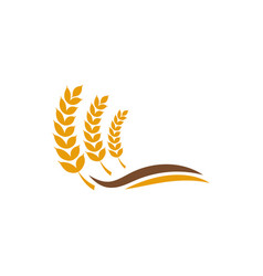wheat grain agriculture graphic design template vector image