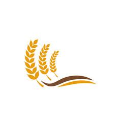Wheat grain agriculture graphic design template vector