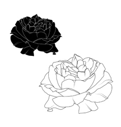 Realistic rose flower bloom black white isolated vector image