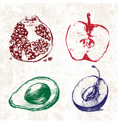 digital detailed color fruit hand drawn vector image