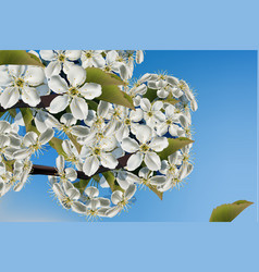 cherry flowers branch realistic beautiful vector image