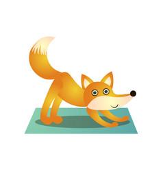 cute colorful fox training yoga pose at soft mat vector image