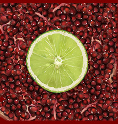 Pomegranate and lime vector