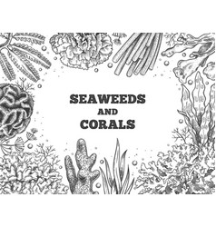 Seaweed background reef aquatic weed and corals vector
